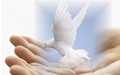 Dove of Peace - peace-and-love-revolution-club wallpaper