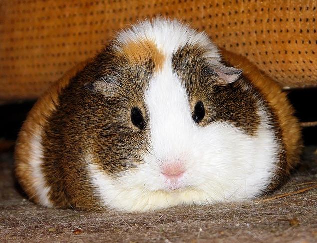Fat, grumpy Balbinka