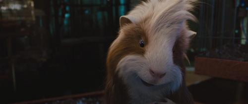 Guinea Pigs wallpaper called G- Force Screencaps