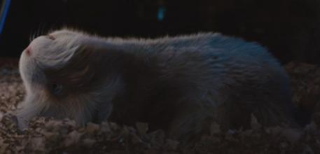 Guinea Pigs wallpaper possibly with a common opossum, an opossum, and a tasmanian devil called G- Force Screencaps