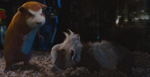 Guinea Pigs wallpaper titled G- Force Screencaps