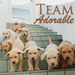 Team Adorable - teddybear64 icon