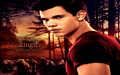 jacob-black - breaking dawn wallpaper wallpaper