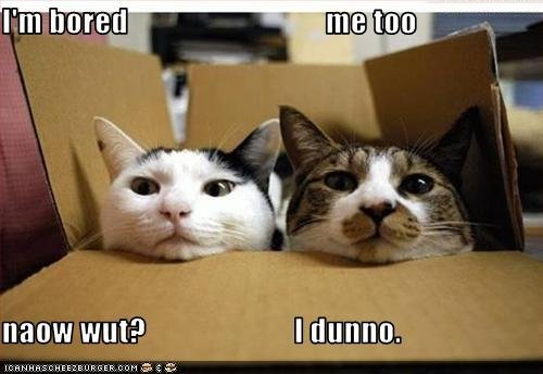Animal Humor wallpaper with a packing box, a tom, and a cat entitled lol