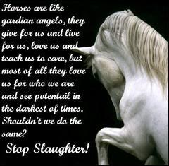 AGAINST HORSE ABUSE!