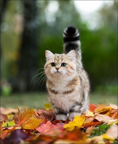Autumn kitty:)