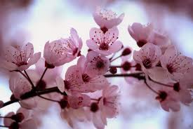 Beautiful flores