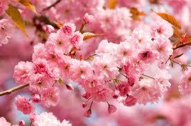 Beautiful fleurs