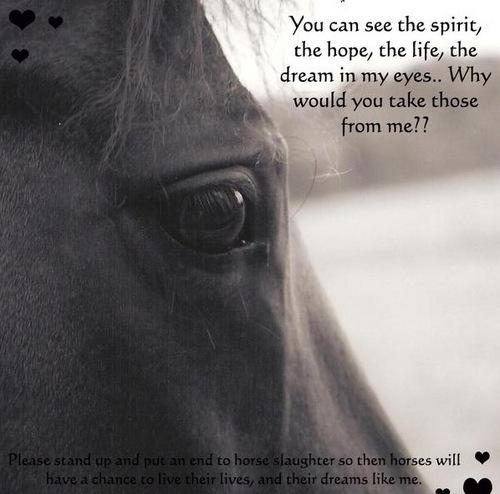 Beautiful Horses.... SAVE THEM!!!