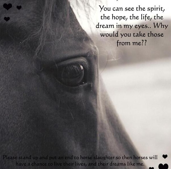 Against Horse Slaughter! images Beautiful Horses.... SAVE THEM ... Horses Eyes Quotes