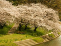 Cherry Blossom Wallpapers - cherry-blossom wallpaper