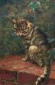 Fine Art Cat