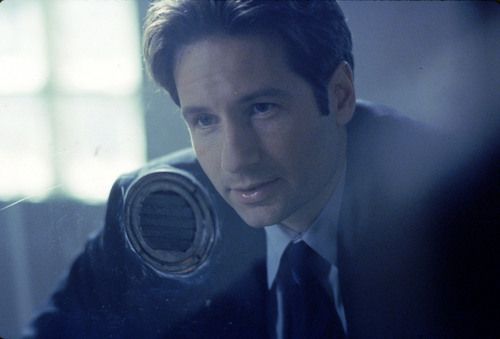 лиса, фокс Mulder