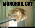 Monorail Cat - animal-humor photo