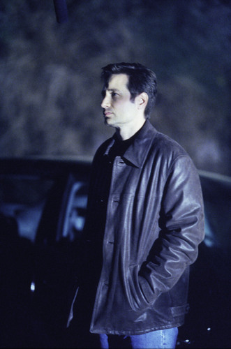 Mulder