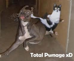 TOTAL PONAGE!!!