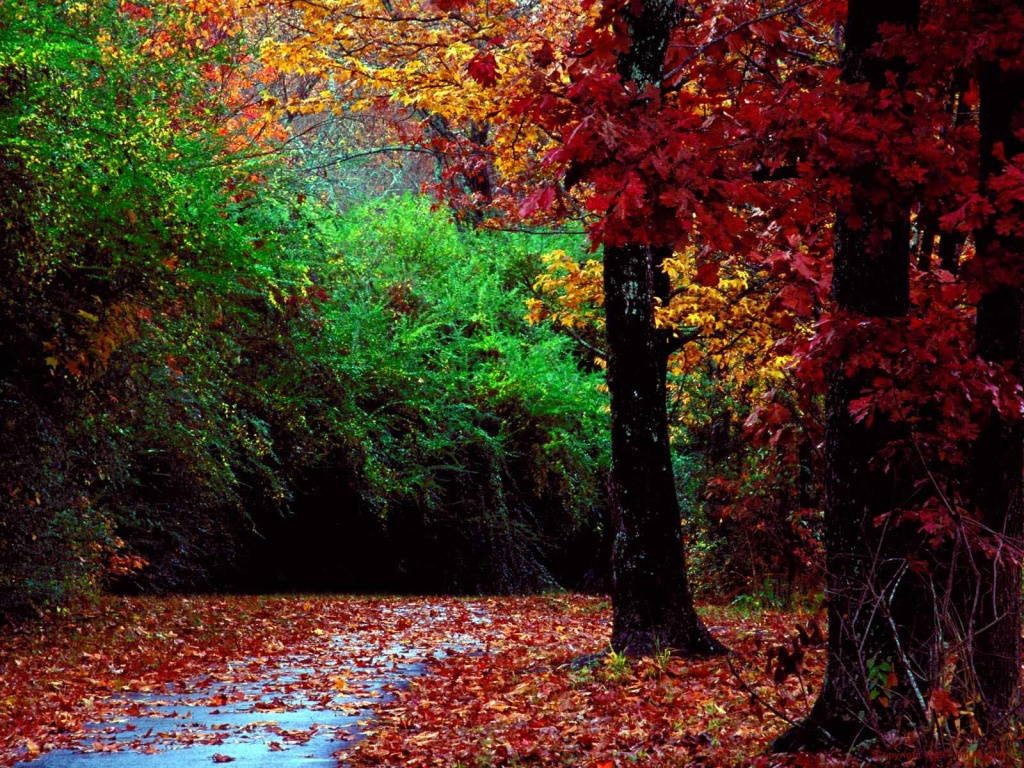 Autumn is a time for dreaming