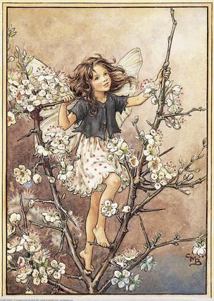 꽃 Fairy