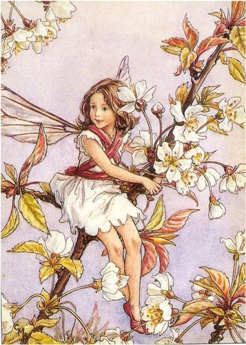 цветок Fairy