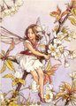 blume Fairy