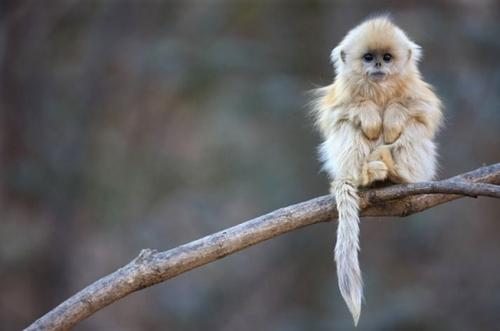 It's a monkey!! X3