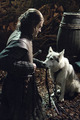 Lady and Eddard Stark - game-of-thrones-direwolves photo
