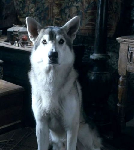 Nymeria - Arya&#39;s direwolf - game-of-thrones-direwolves Photo
