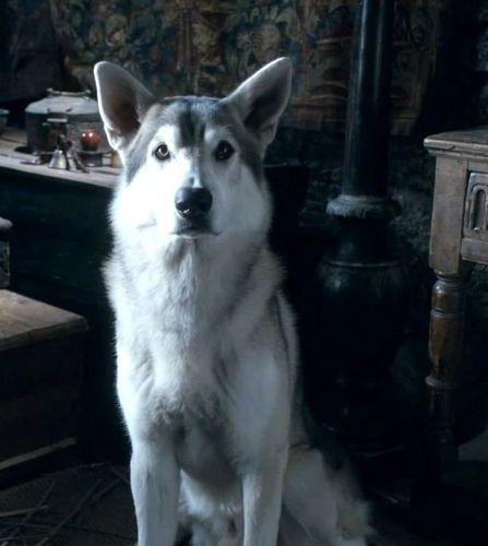 Nymeria - Arya's direwolf