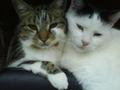 cat love xxx - cats photo