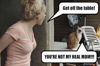 Lol lol cats photo