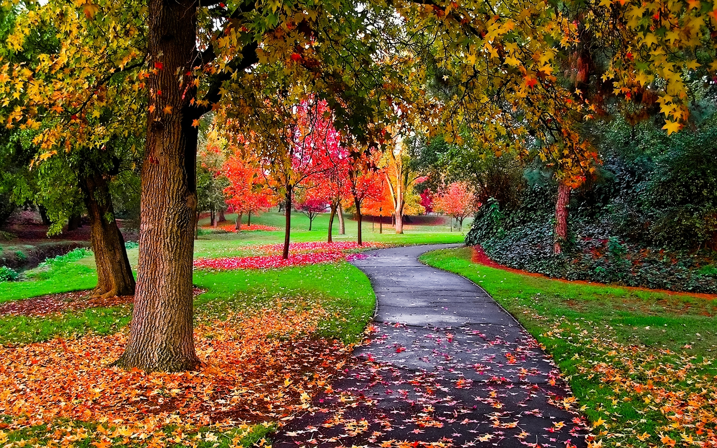 Girl in the autumn park wallpaper wallpaper wide hd for In wallpaper