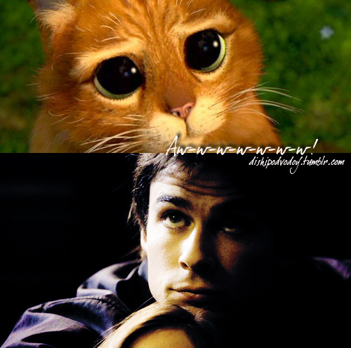 Damon Salvatore wolpeyper with a kitten and a tom entitled Cute Funny Damon