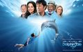 Dolphin Tale - dolphin-tale wallpaper