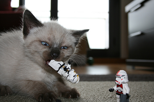 JEDI Kitty cats