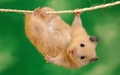 Just Hanging around - yorkshire_rose wallpaper