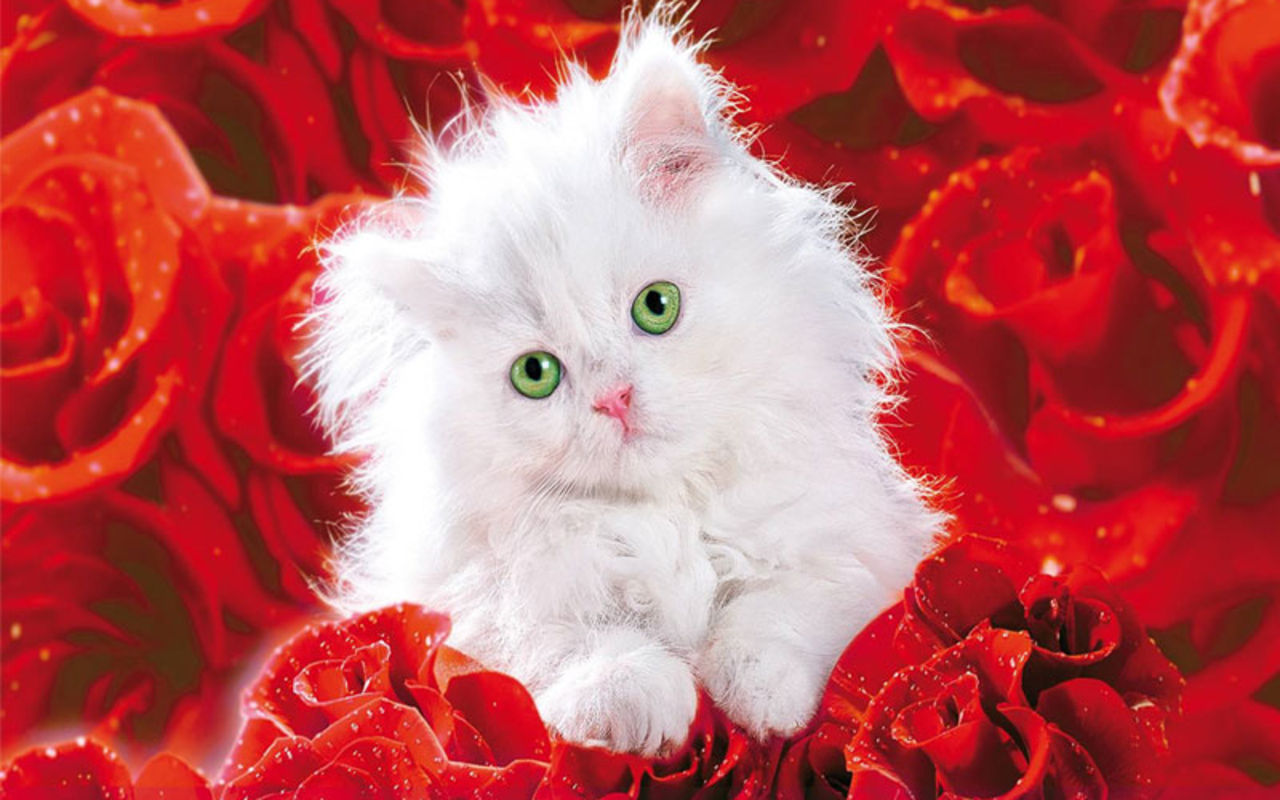Pretty kitty roses wallpaper 25517192 fanpop - Pretty roses wallpaper ...