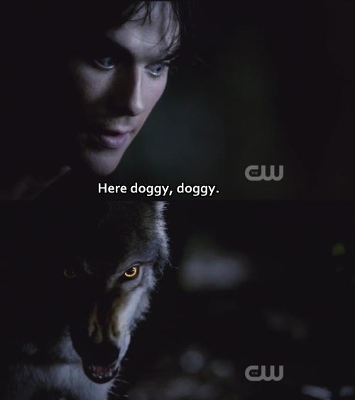 vampire diaries quotes and sayings - photo #8