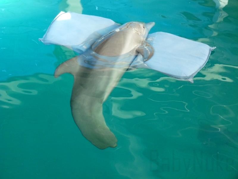 Winter - Dolphin Tale fondo de pantalla (25515721) - fanpop