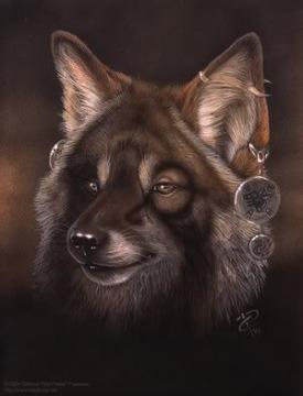 serigala, wolf