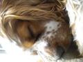 best pups evr!