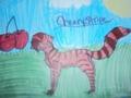 cherrystripe