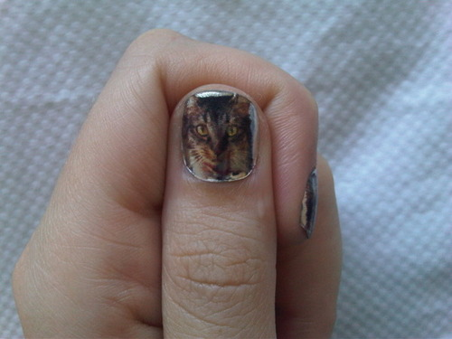 katys pusst cat inspire her nails