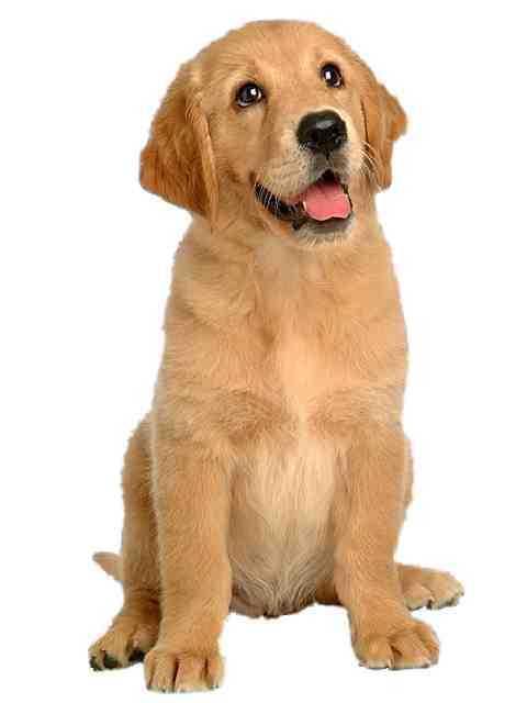 Dogs dog ssssss