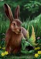 खरगोश, हरे & Sprite