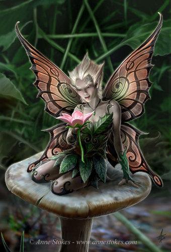 버섯 Fairy