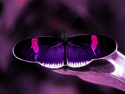 Purple Butterfly 100% Real ♥ - allsoppa Photo