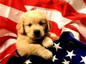 anjing, anak anjing with flag