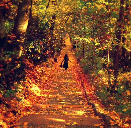Autumn :D