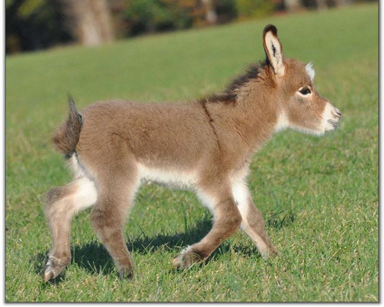 Donkeys Images Donkey Baby HD Wallpaper And Background Photos