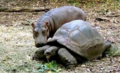 Hippo and a turtle - cute-animals photo
